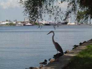 a picture of Tampa Bay with an egret