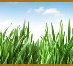 Tampa Bay Lawn Care by Always Green