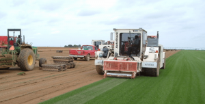 harvesting sod by Charlies re-sod that Always Green maintains
