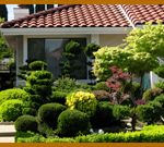 healthy. well groomed tree, shrubs and bushes