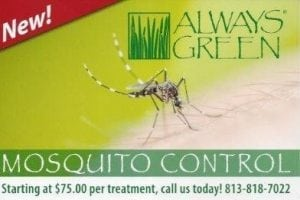 Always Green Mosquito Control Offering