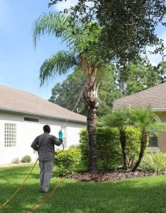 always green technician spraying a tree with a special blend of disease control, & insect Ccontrol.