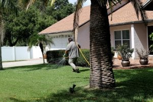 a always green techniian in a green yard delivering a lawn care treatment