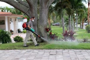 always green delivering a mosquito control treatment fog