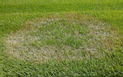 Proactive Approach to Prevent Brown Patch
